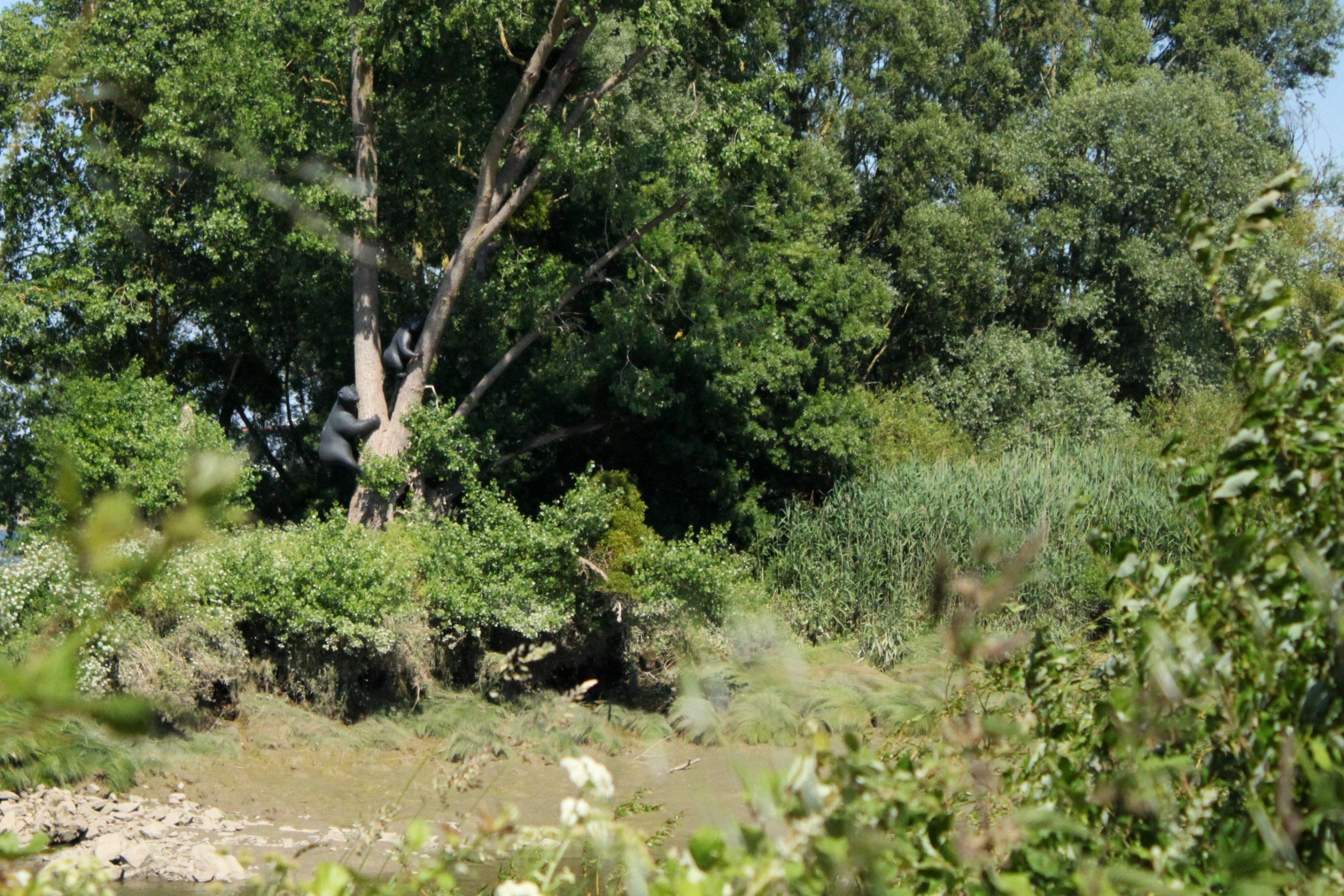 Découvrir l'estuaire de la Loire : de Roche-Ballue à Port-Lavigne
